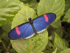Butterfly in Mindo